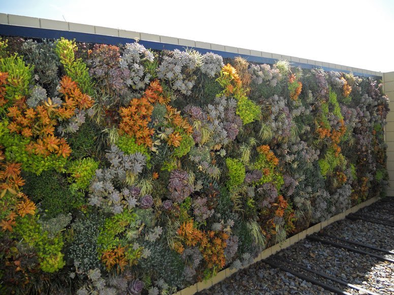 A living wall covered in succulents